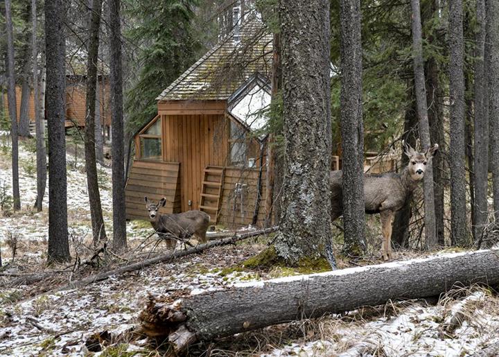Banff Spring retreat